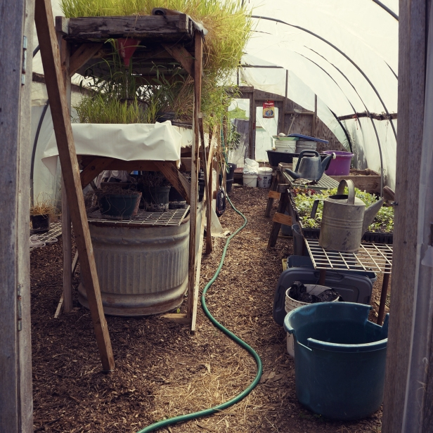 One of the little seedling areas.