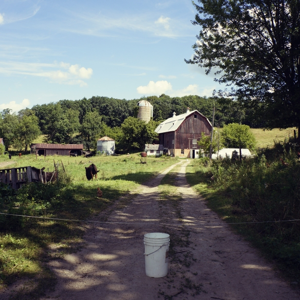 Down the road to our barn. The bucket is a reminder that the electric fence is here right now.